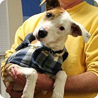 Adopt A Pet :: Bristol - Knoxville, TN
