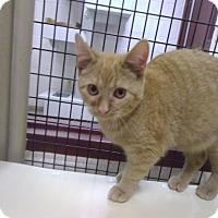Adopt A Pet :: Twinkle - Muscatine, IA
