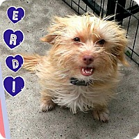 Adopt A Pet :: Verdi - Mesa, AZ
