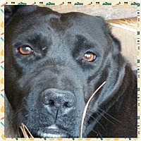 Adopt A Pet :: Lua - West Columbia, SC