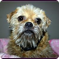 Adopt A Pet :: JODY in Rogers, AR. - Little Rock, AR