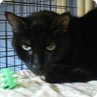 Adopt A Pet :: Mikey - Colmar, PA