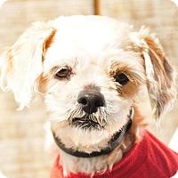 Adopt A Pet :: Bella - East Hartland, CT