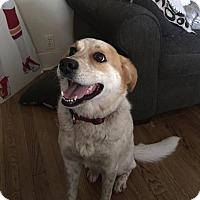 Adopt A Pet :: Jada - Overland Park, KS