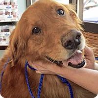 Adopt A Pet :: Dagwood - BIRMINGHAM, AL