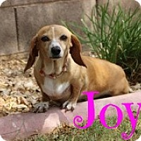 Adopt A Pet :: Joy - Scottsdale, AZ
