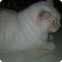 Adopt A Pet :: LA-Oliver - Devon, PA