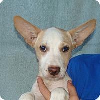 Adopt A Pet :: Tao - Oviedo, FL