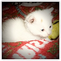 Adopt A Pet :: LITZ - Medford, WI
