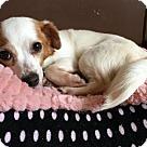 Adopt A Pet :: Renata