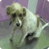 Adopt A Pet :: Jilly - Aurora, CO