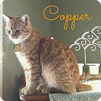 Adopt A Pet :: Copper - Valley City, ND
