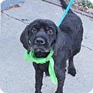 Adopt A Pet :: Mac