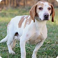 Adopt A Pet :: Nobel - Waldorf, MD