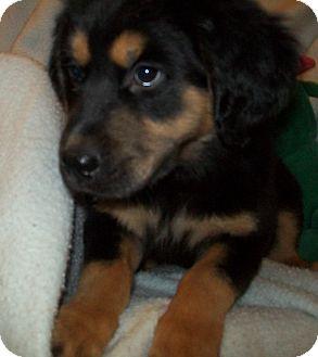 Annie | Adopted Puppy ...