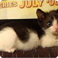 Adopt A Pet :: Marlin - Davis, CA