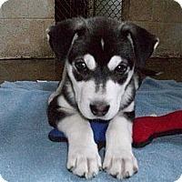 Adopt A Pet :: Frisco - 3 months - Augusta County, VA