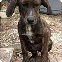 Adopt A Pet :: Bridgette - Fulton, MD