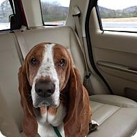 Adopt A Pet :: Freddie - Northport, AL