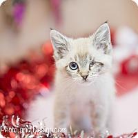 Adopt A Pet :: Ragetti - Fountain Hills, AZ