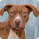 Adopt A Pet :: George Takei