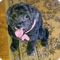 Adopt A Pet :: CEE CEE - Melbourne, FL