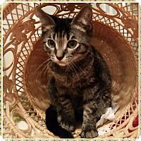 Adopt A Pet :: Nick 151456 - Atlanta, GA