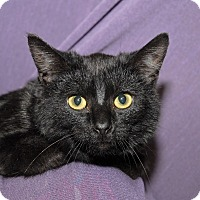Adopt A Pet :: Ellie - Red Wing, MN