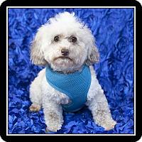 Adopt A Pet :: Maddie - San Dimas, CA
