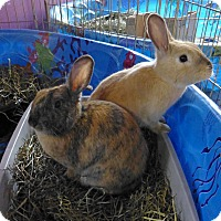 Adopt A Pet :: Arnold Palmer and Ben Hogan - Alexandria, VA