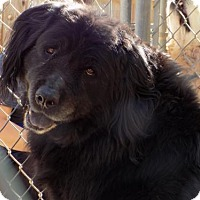 Adopt A Pet :: Psyche - Apple Valley, CA