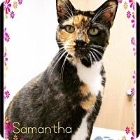 Adopt A Pet :: Samantha - Flushing, NY