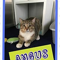 Adopt A Pet :: Angus - Edwards AFB, CA