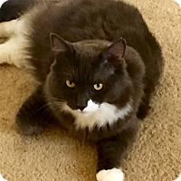 Adopt A Pet :: William - Cerritos, CA