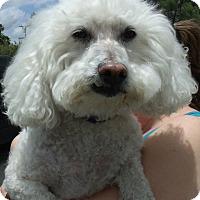Adopt A Pet :: KOBIE - Corona, CA