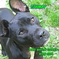 Adopt A Pet :: Sammy - Huddleston, VA