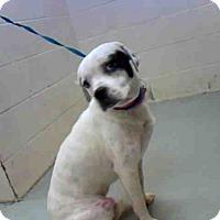 Adopt A Pet :: JAX - Conroe, TX