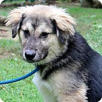 Adopt A Pet :: Matt - Yardley, PA