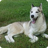 Adopt A Pet :: Gunner - ON HOLD - NO MORE APPLICATIONS - Glen Burnie, MD