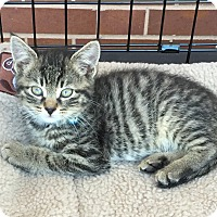 Adopt A Pet :: Blue - Horsham, PA