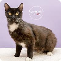 Adopt A Pet :: Sally - Apache Junction, AZ