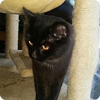 Adopt A Pet :: Sweet Pea - Warrenton, MO
