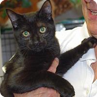 Adopt A Pet :: Lenny - Longview, WA