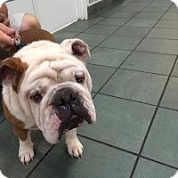 Adopt A Pet :: Charles - Columbus, OH