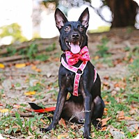 Adopt A Pet :: Lisha - Castro Valley, CA