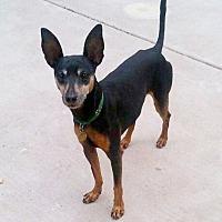 Adopt A Pet :: Blake - Sacramento, CA