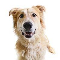 Adopt A Pet :: Mazyoun (Rafiki) - Wilmington, DE