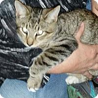 Adopt A Pet :: Brutus - Huntington, WV