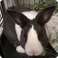 Adopt A Pet :: Max - Newport, KY