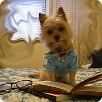 Adopt A Pet :: Scruffy - Warren, MI